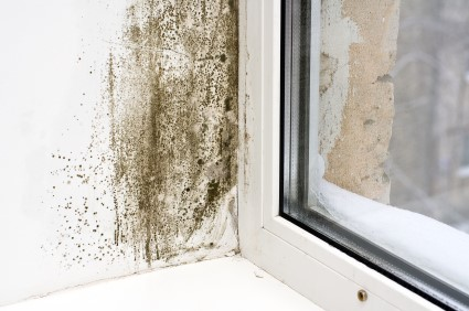 Mold Removal in North Bergen by EZ Restoration LLC